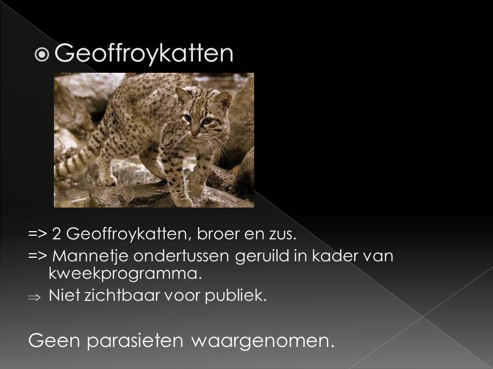 Geoffroykatten Geen parasieten waargenomen.