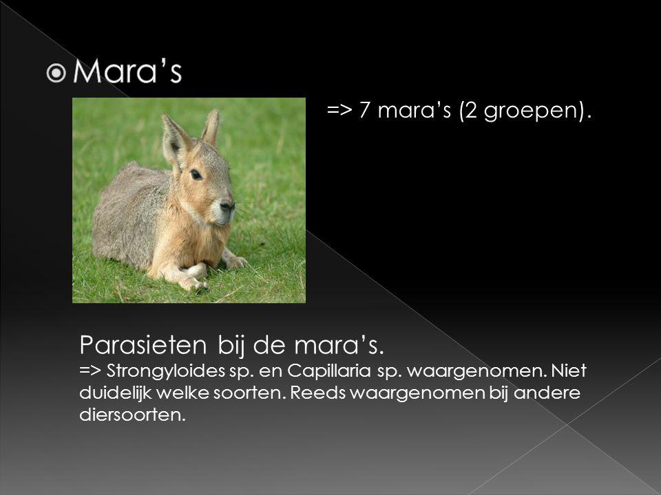 Mara's Parasieten bij de mara's. => 7 mara's (2 groepen).