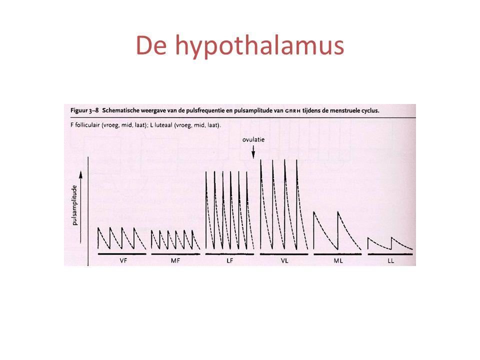 De hypothalamus