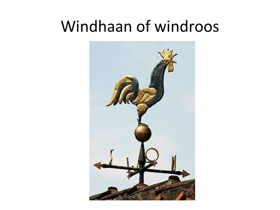 Windhaan of windroos