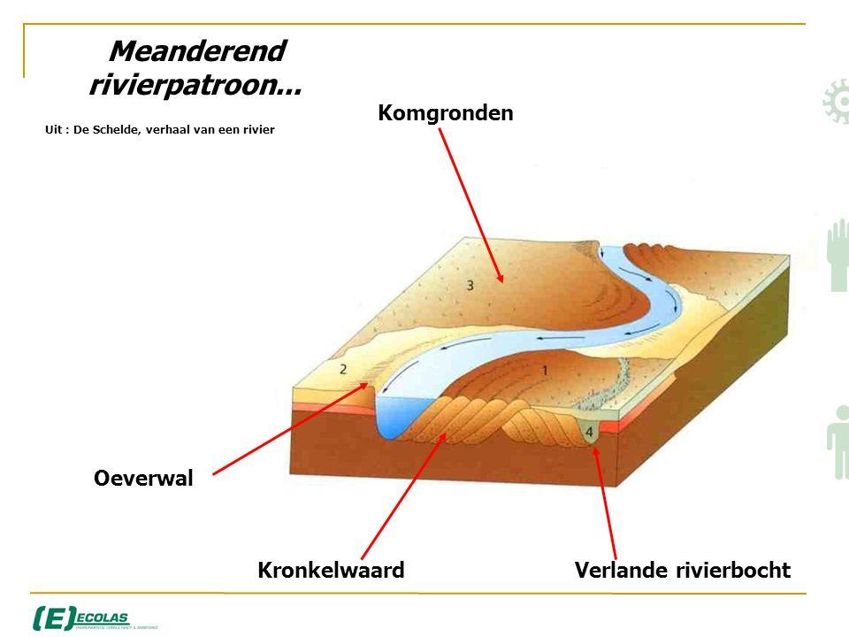 Meanderend rivierpatroon... Uit : De Schelde, verhaal van een rivier