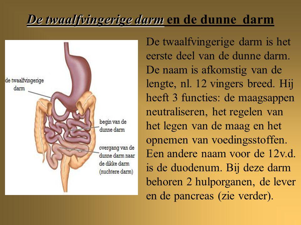 De twaalfvingerige darm en de dunne darm
