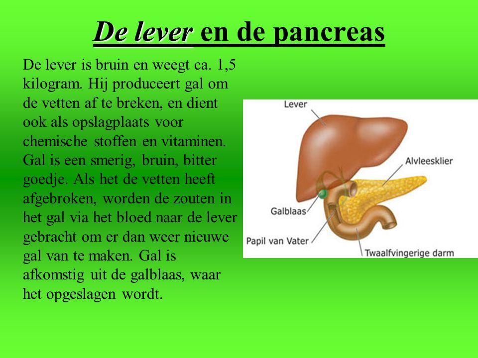 De lever en de pancreas