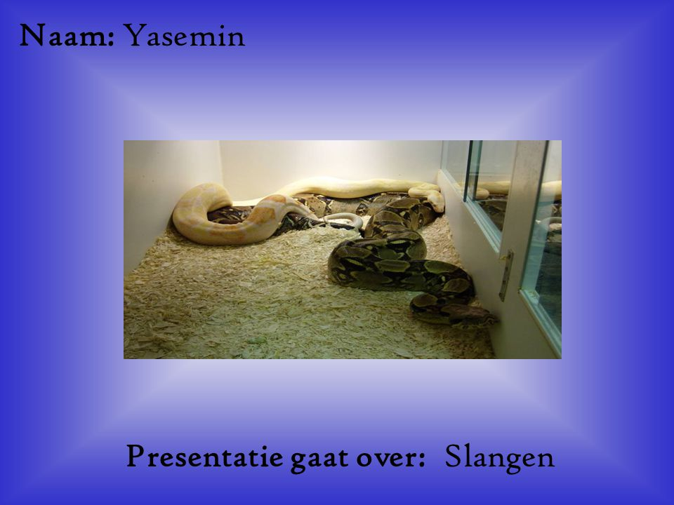 Presentatie gaat over: Slangen