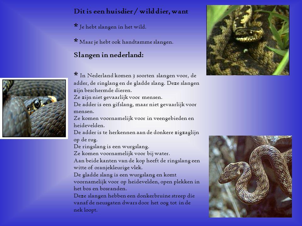 * Je hebt slangen in het wild. * Maar je hebt ook handtamme slangen.