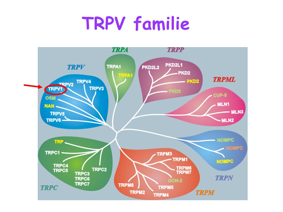 TRPV familie