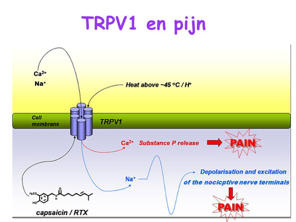 TRPV1 en pijn Na+ PAIN of the nocicptive nerve terminals PAIN