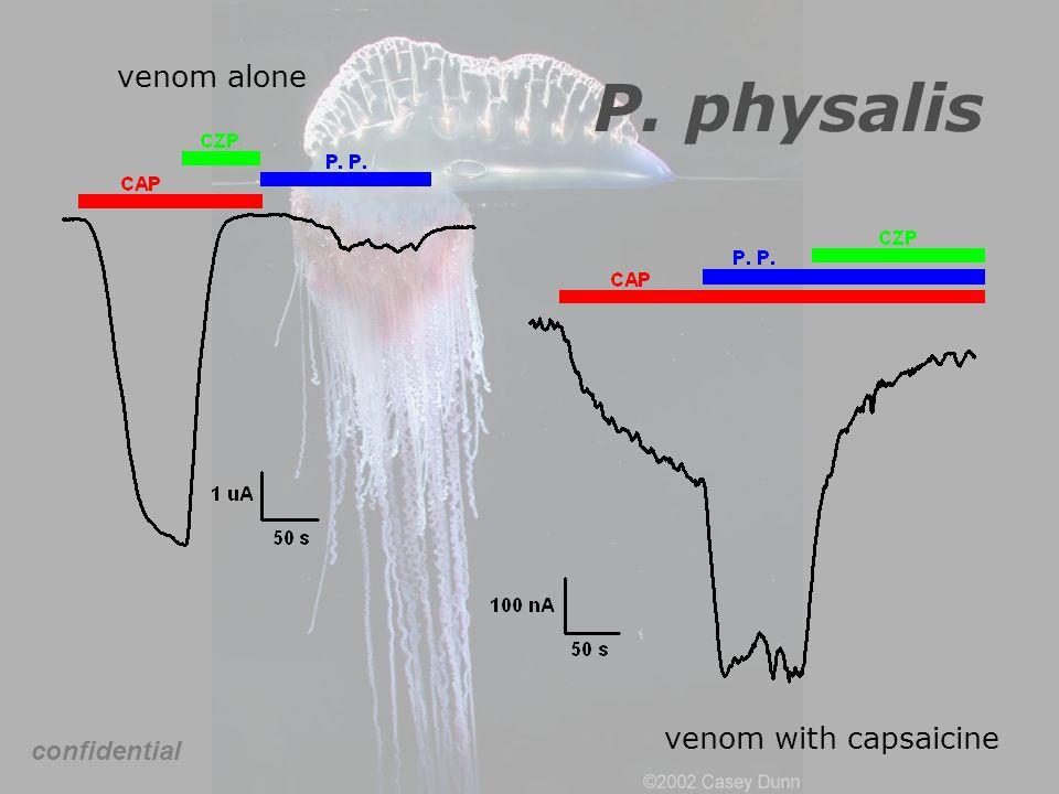 venom alone P. physalis venom with capsaicine confidential
