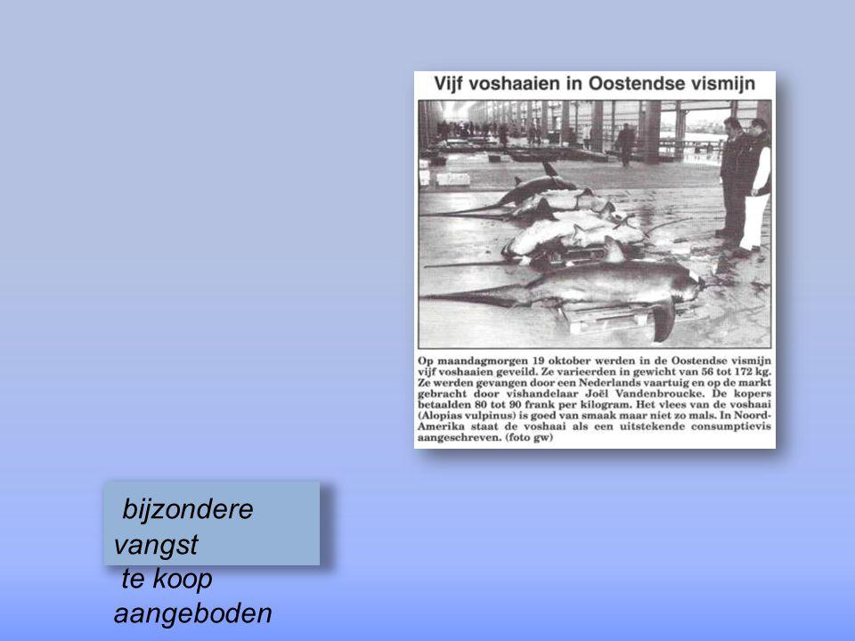 bijzondere vangst te koop aangeboden