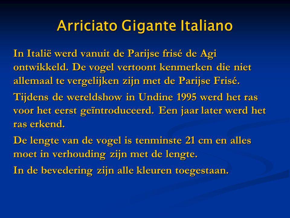 Arriciato Gigante Italiano