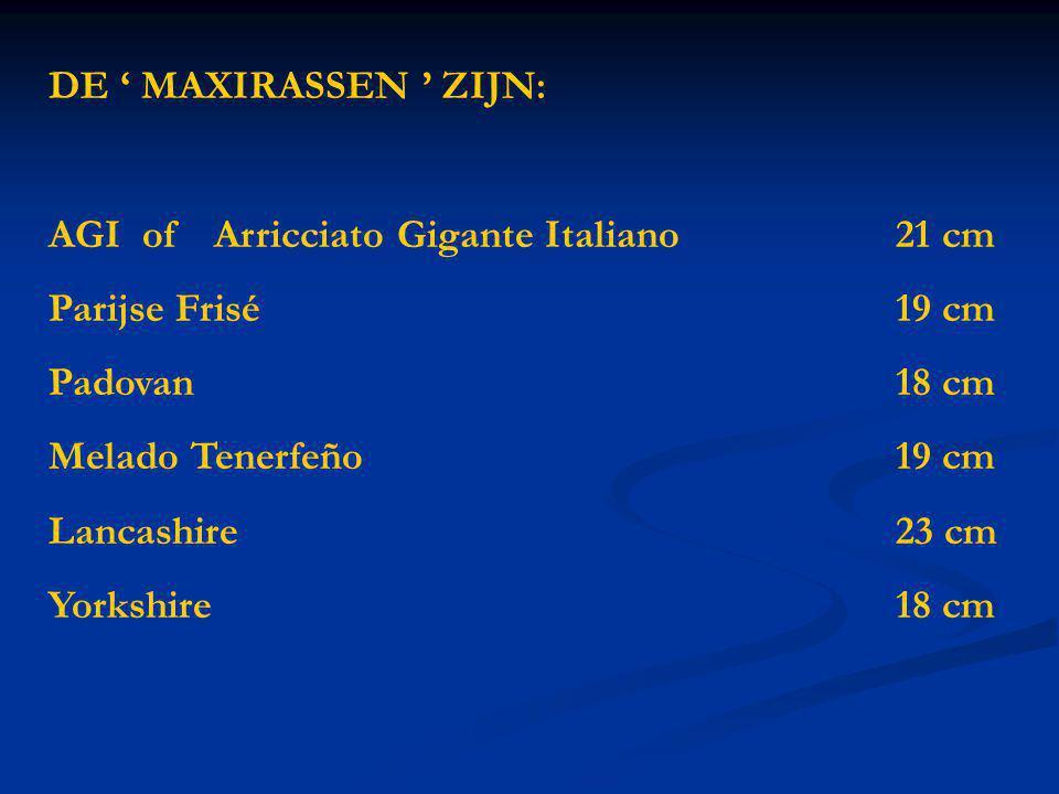 DE ' MAXIRASSEN ' ZIJN: AGI of Arricciato Gigante Italiano 21 cm. Parijse Frisé 19 cm. Padovan 18 cm.