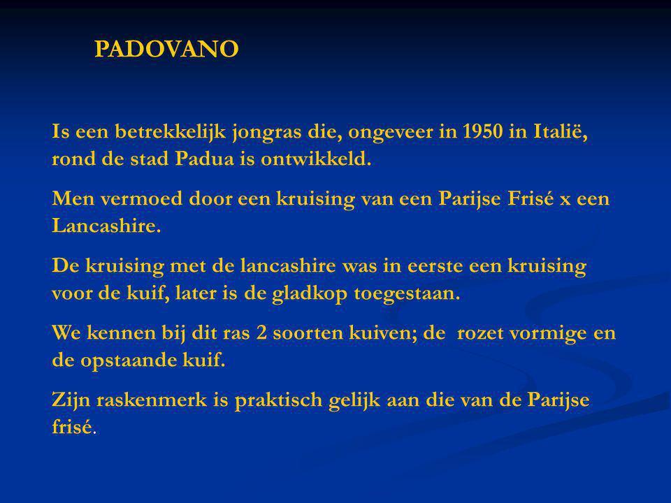 PADOVANO Is een betrekkelijk jongras die, ongeveer in 1950 in Italië, rond de stad Padua is ontwikkeld.