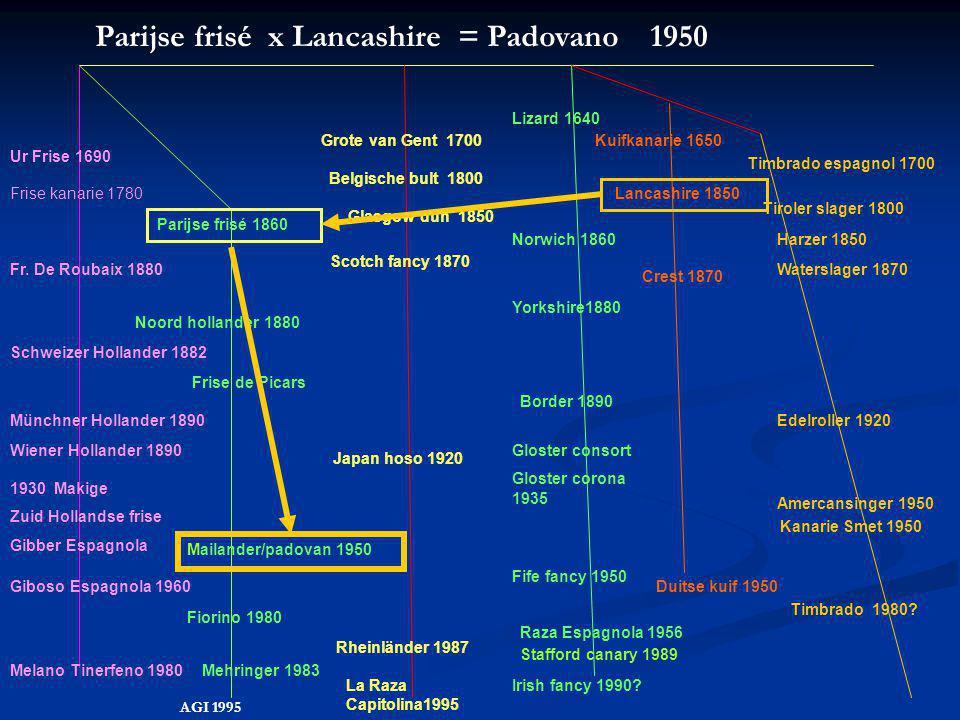 Parijse frisé x Lancashire = Padovano 1950