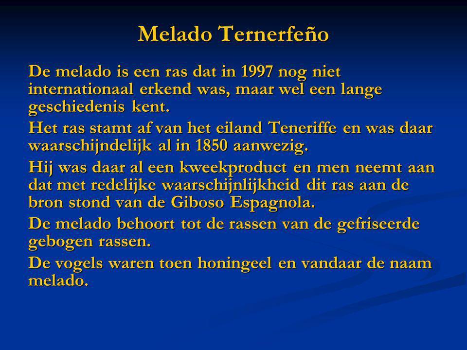 Melado Ternerfeño De melado is een ras dat in 1997 nog niet internationaal erkend was, maar wel een lange geschiedenis kent.
