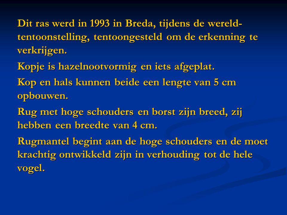 Dit ras werd in 1993 in Breda, tijdens de wereld- tentoonstelling, tentoongesteld om de erkenning te verkrijgen.