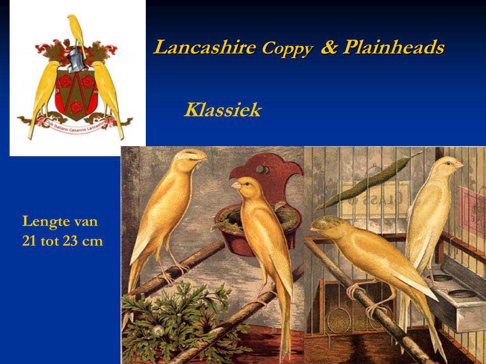 Lancashire Coppy & Plainheads