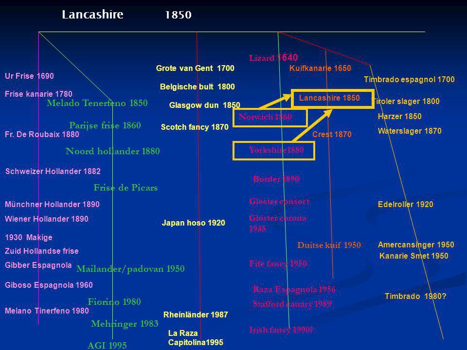 Lancashire 1850 Melado Tenerfeno 1850 Parijse frise 1860