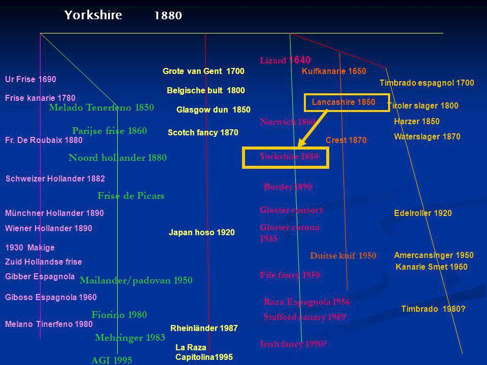 Yorkshire 1880 Melado Tenerfeno 1850 Parijse frise 1860