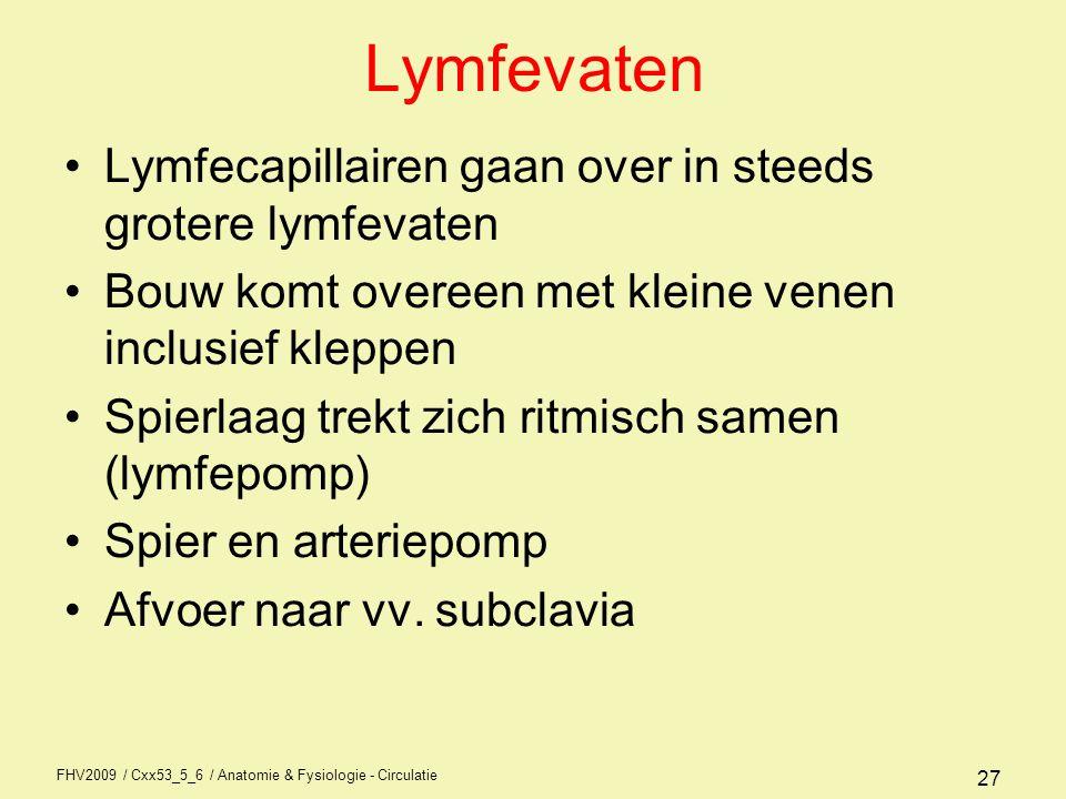 Lymfevaten Lymfecapillairen gaan over in steeds grotere lymfevaten