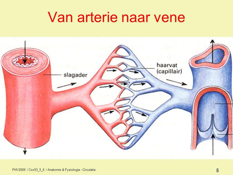 Van arterie naar vene FHV2009 / Cxx53_5_6 / Anatomie & Fysiologie - Circulatie