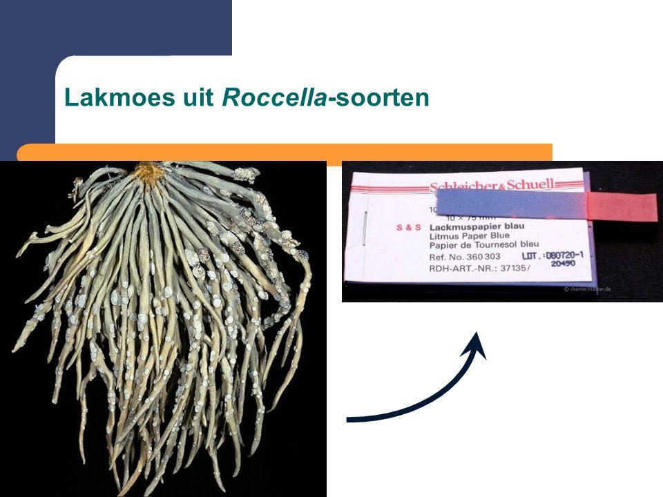Lakmoes uit Roccella-soorten