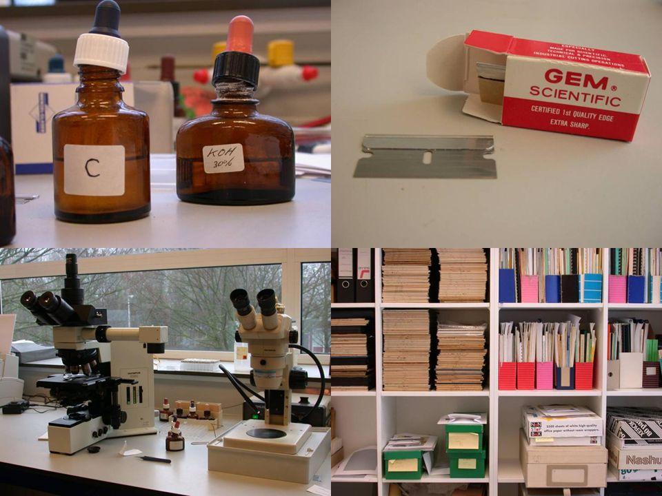 Hulpmiddelen bij het onderzoeken van korstmossen: chemische reagentia, prepareermateriaal, microscoop en literatuur