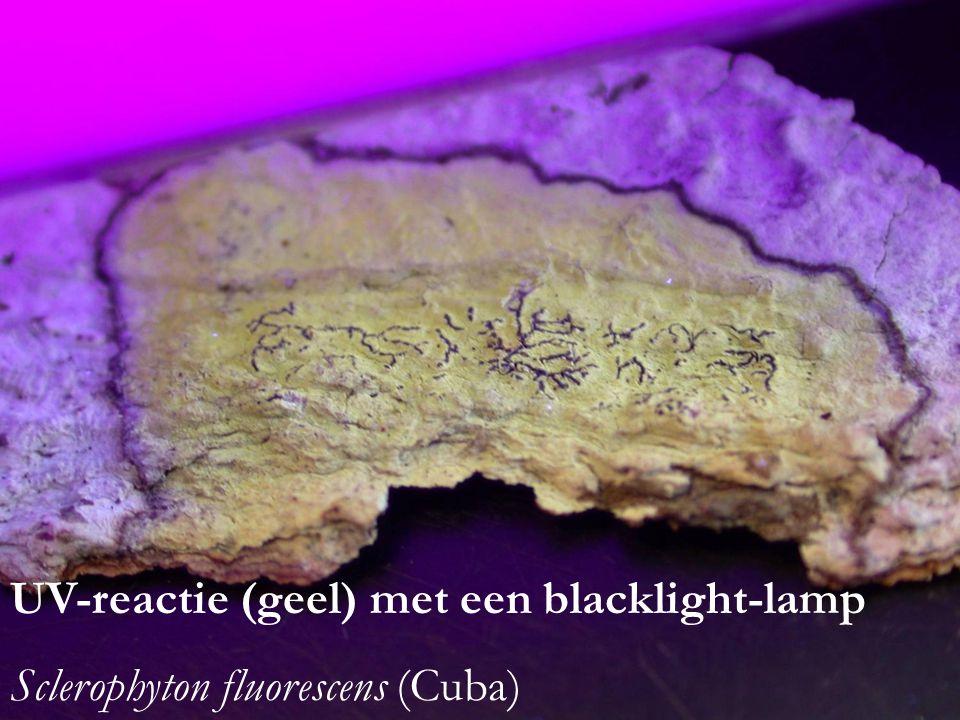 UV-reactie (geel) met een blacklight-lamp