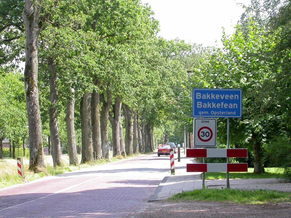 Oude laanbomen, ook langs drukke wegen, zijn vaak rijkelijk begroeid.
