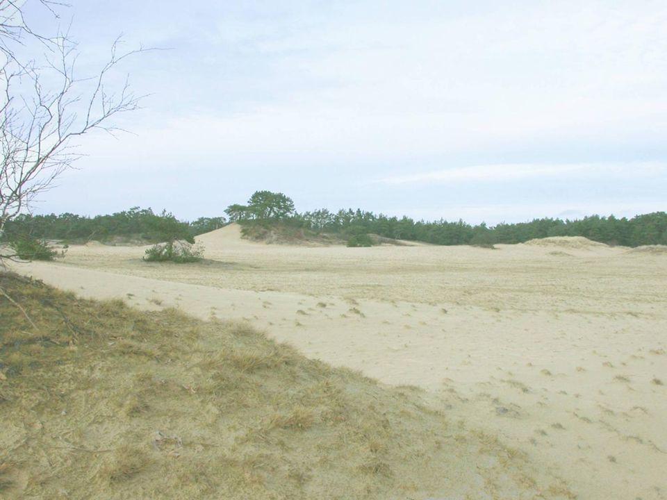 Zandverstuivingen komen bijna alleen nog in Nederland voor en zijn rijk aan korstmossen.