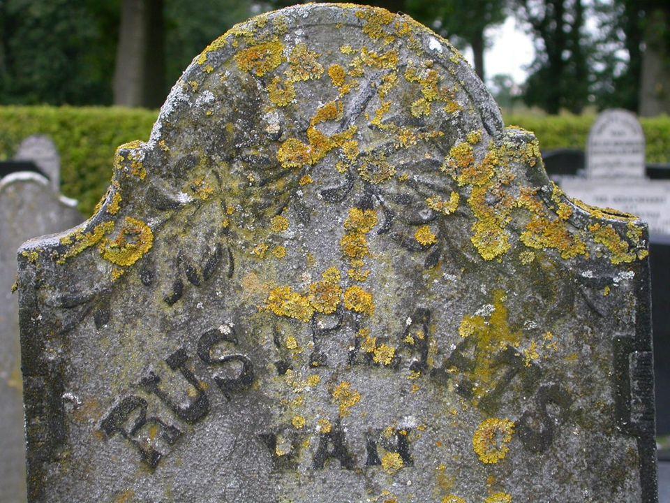 Ook oude grafstenen zijn vaak rijkelijk met korstmossen begroeid.