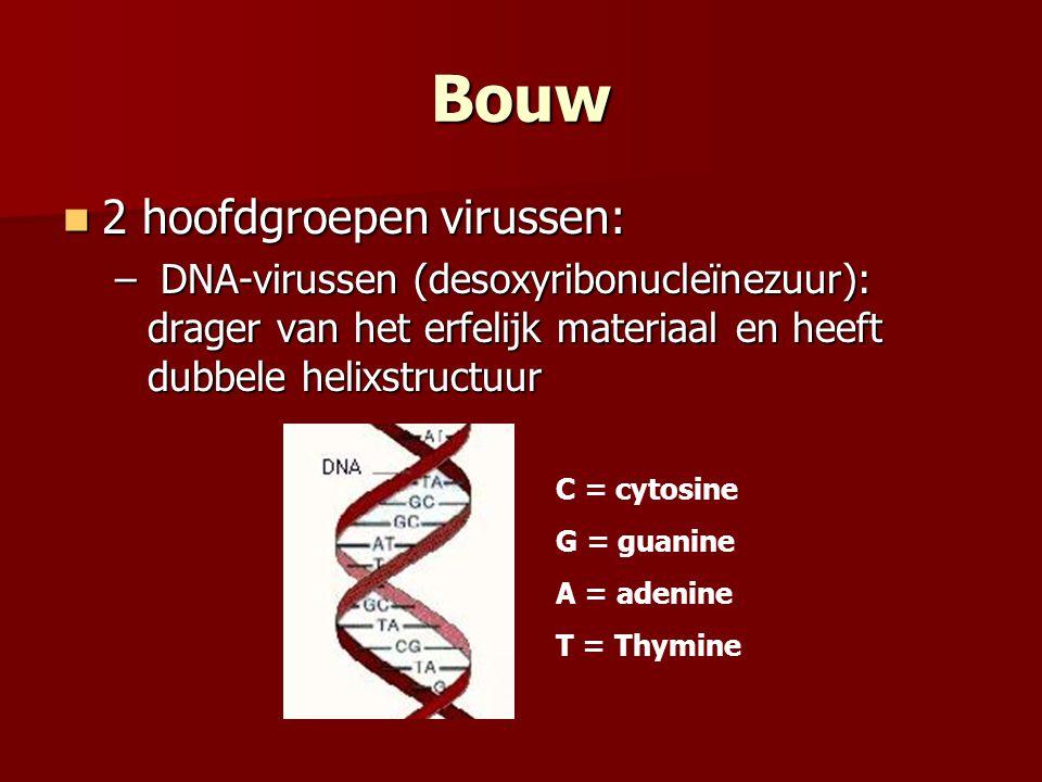 Bouw 2 hoofdgroepen virussen: