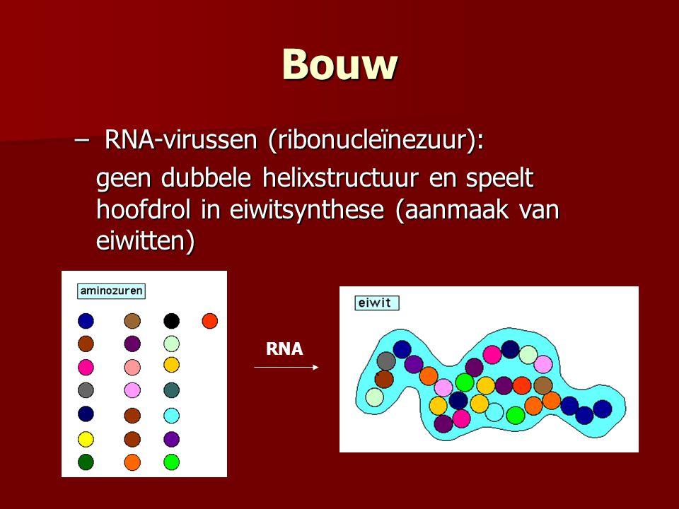 Bouw RNA-virussen (ribonucleïnezuur):