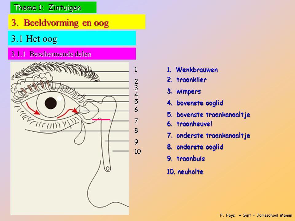3. Beeldvorming en oog 3.1 Het oog Thema 1: Zintuigen