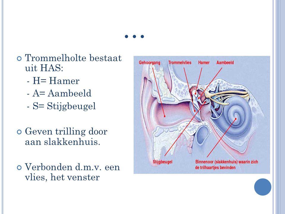 … Trommelholte bestaat uit HAS: - H= Hamer - A= Aambeeld