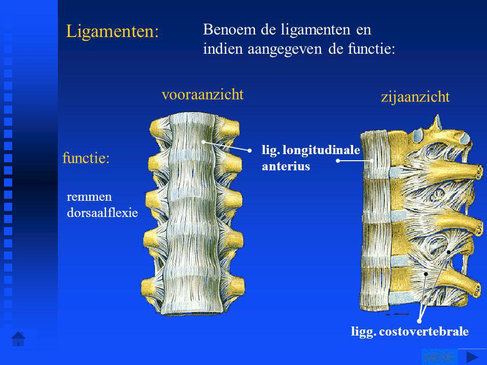 Ligamenten: Benoem de ligamenten en indien aangegeven de functie: