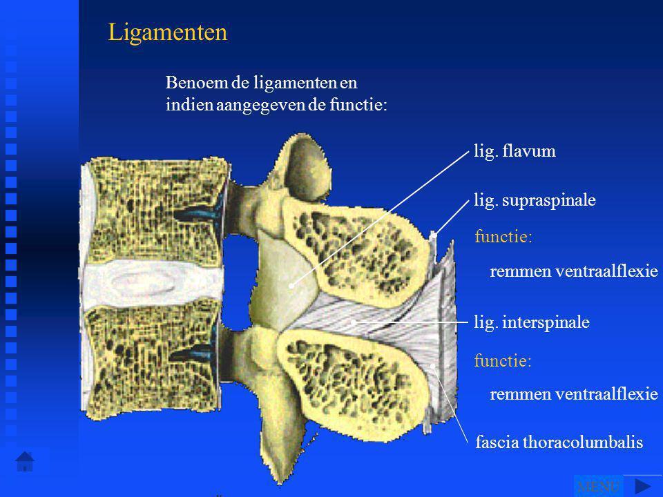 Ligamenten Benoem de ligamenten en indien aangegeven de functie: