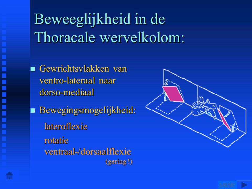 Beweeglijkheid in de Thoracale wervelkolom: