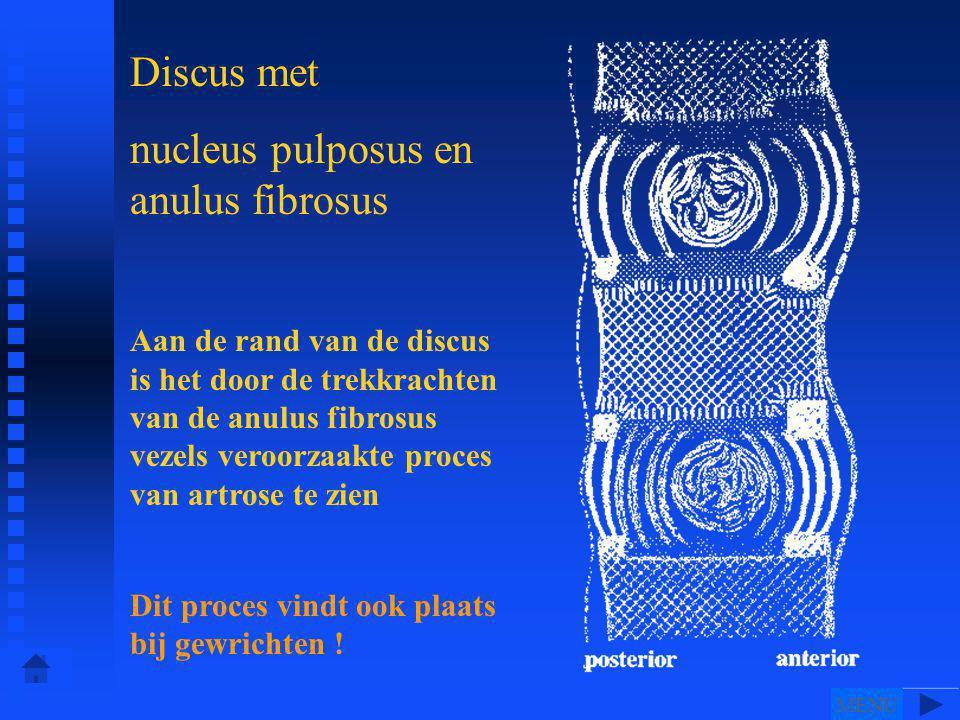 nucleus pulposus en anulus fibrosus