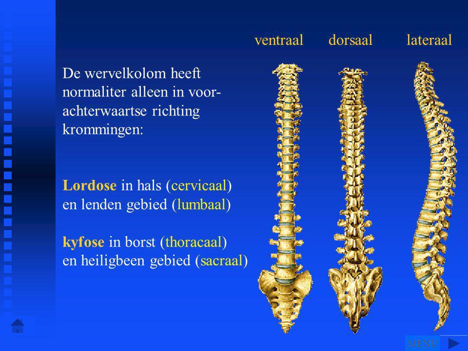 Lordose in hals (cervicaal) en lenden gebied (lumbaal)