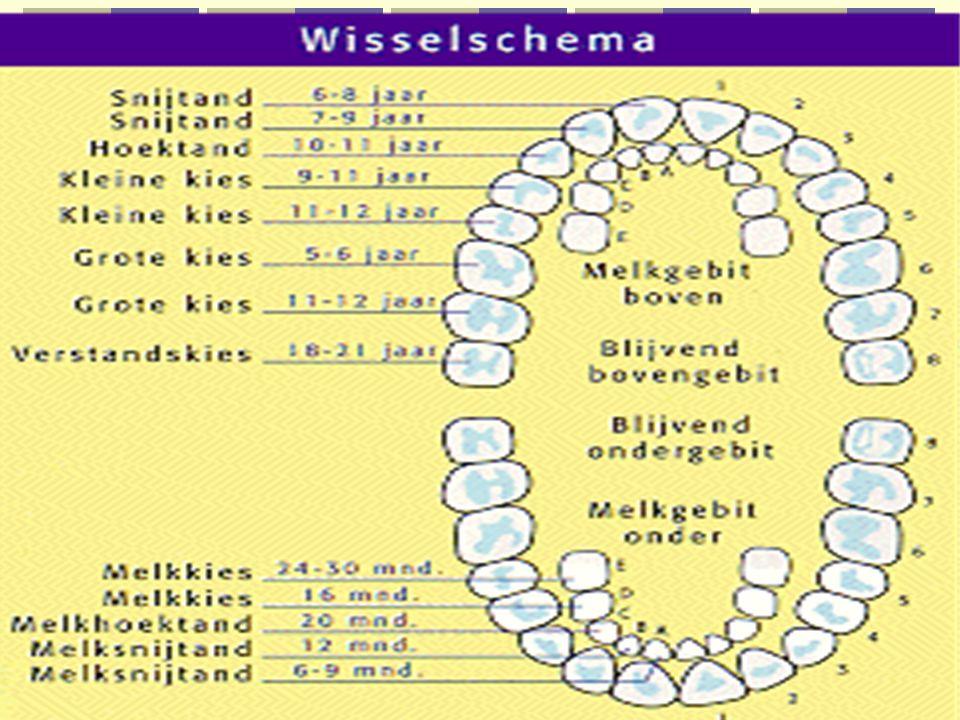 wisselschema