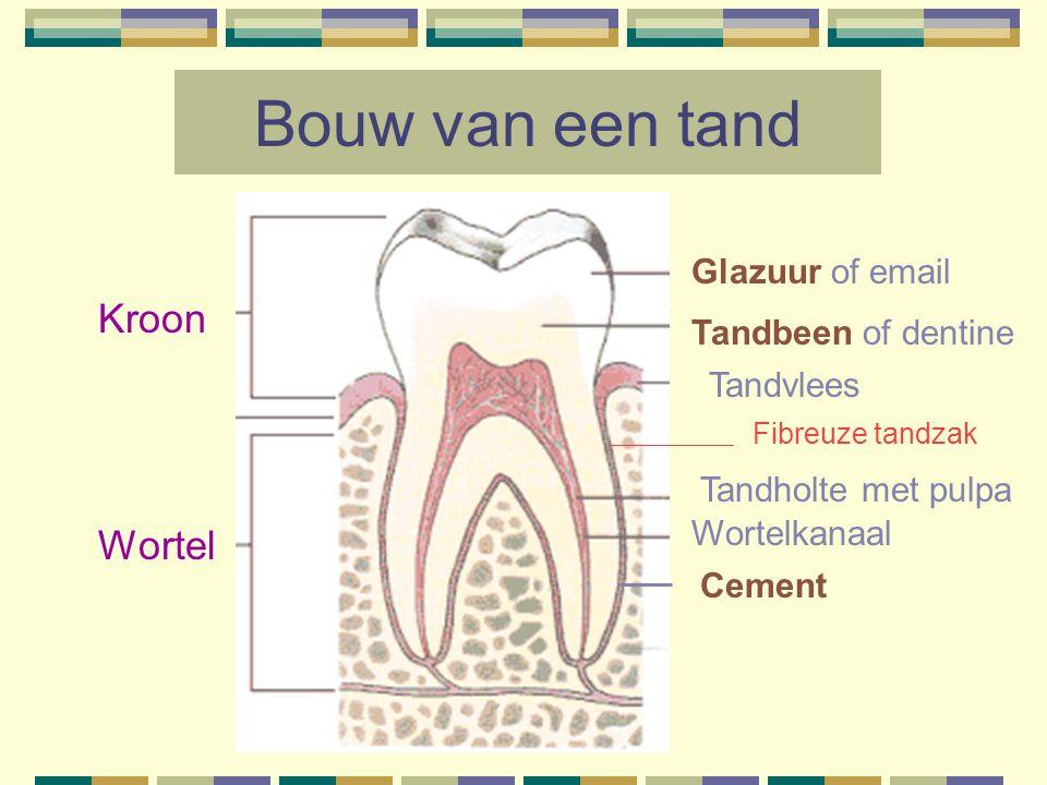 Bouw van een tand Kroon Wortel Glazuur of email Tandbeen of dentine