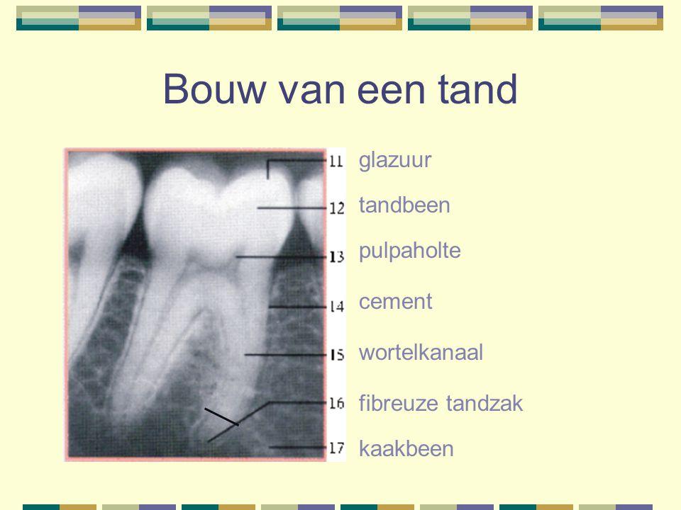 Bouw van een tand glazuur tandbeen pulpaholte cement wortelkanaal