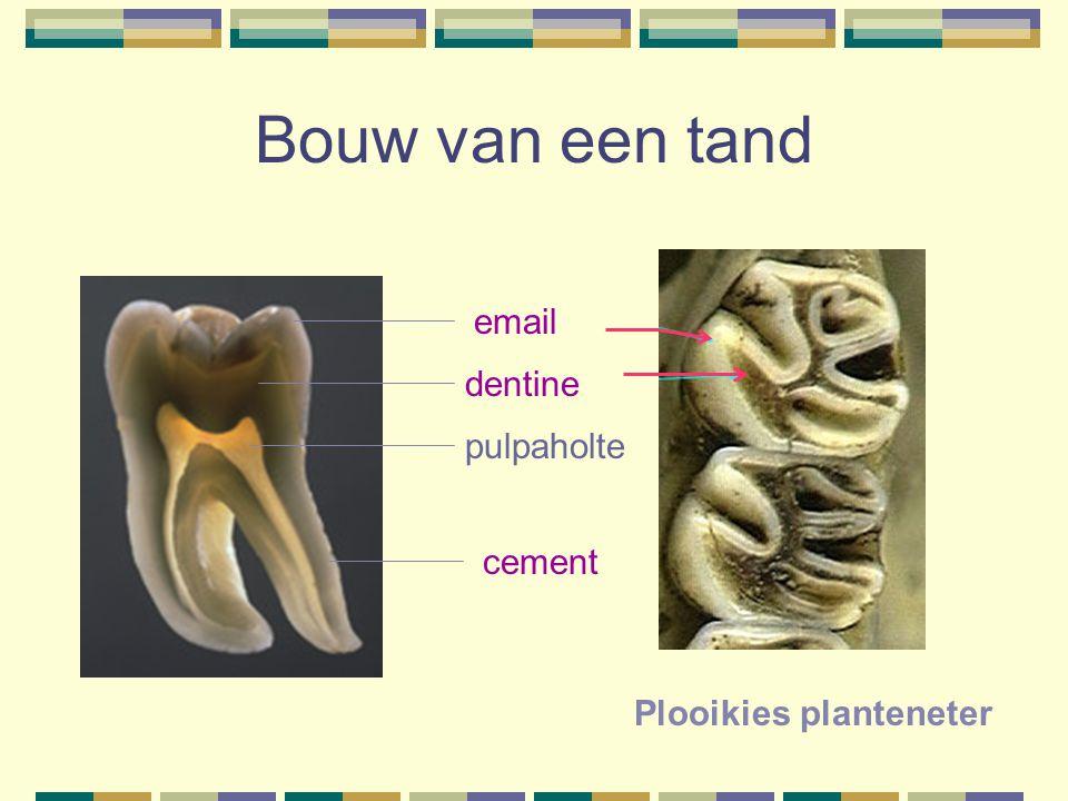 Bouw van een tand email dentine pulpaholte cement