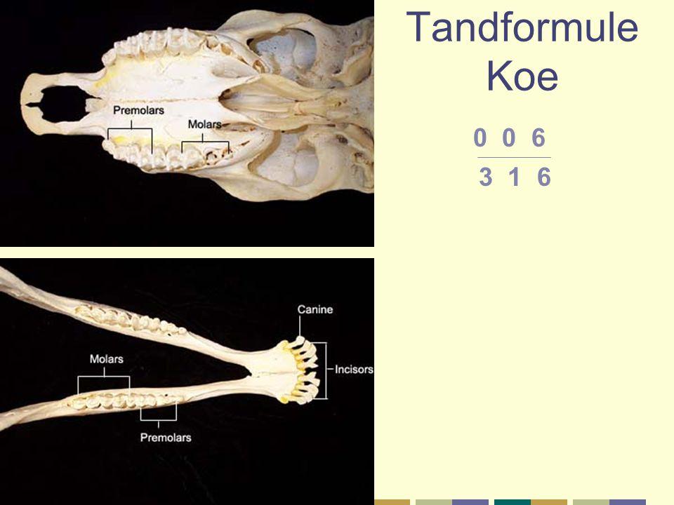 Tandformule Koe 0 0 6 3 1 6