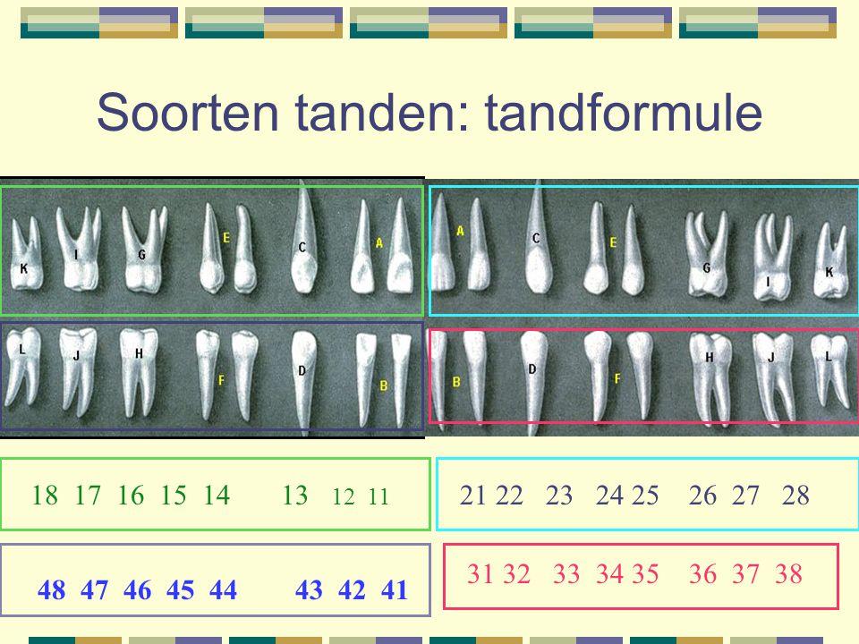 Soorten tanden: tandformule