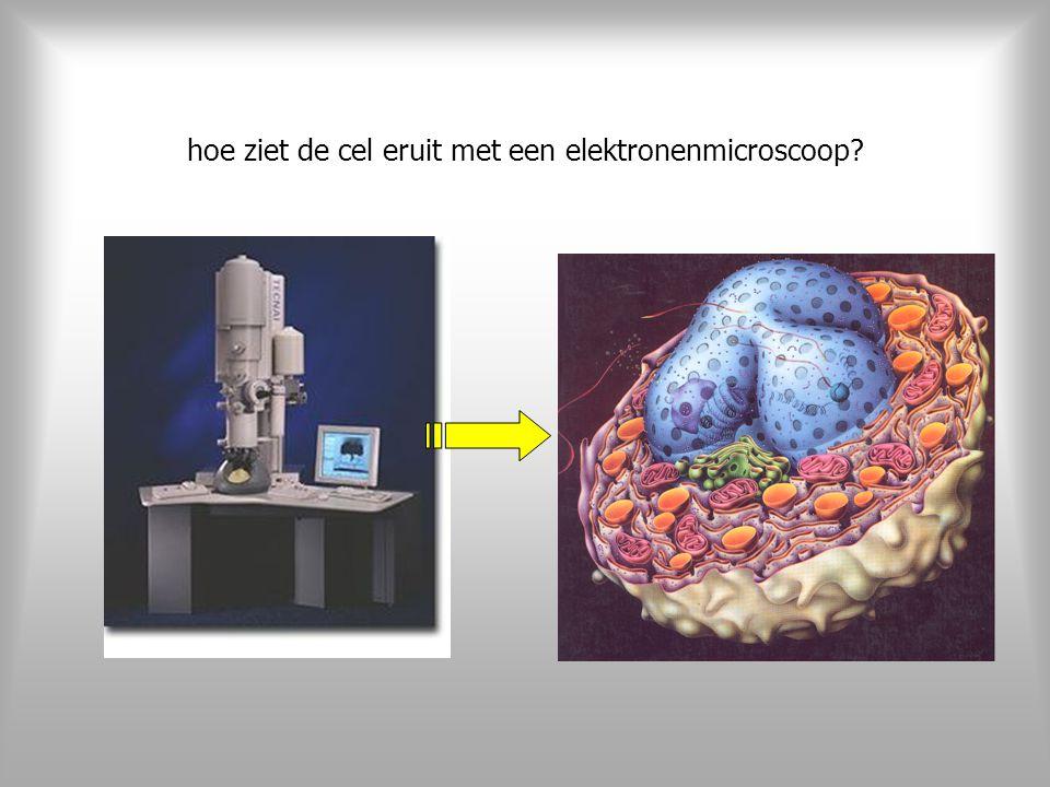 hoe ziet de cel eruit met een elektronenmicroscoop