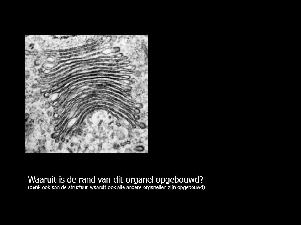 Waaruit is de rand van dit organel opgebouwd