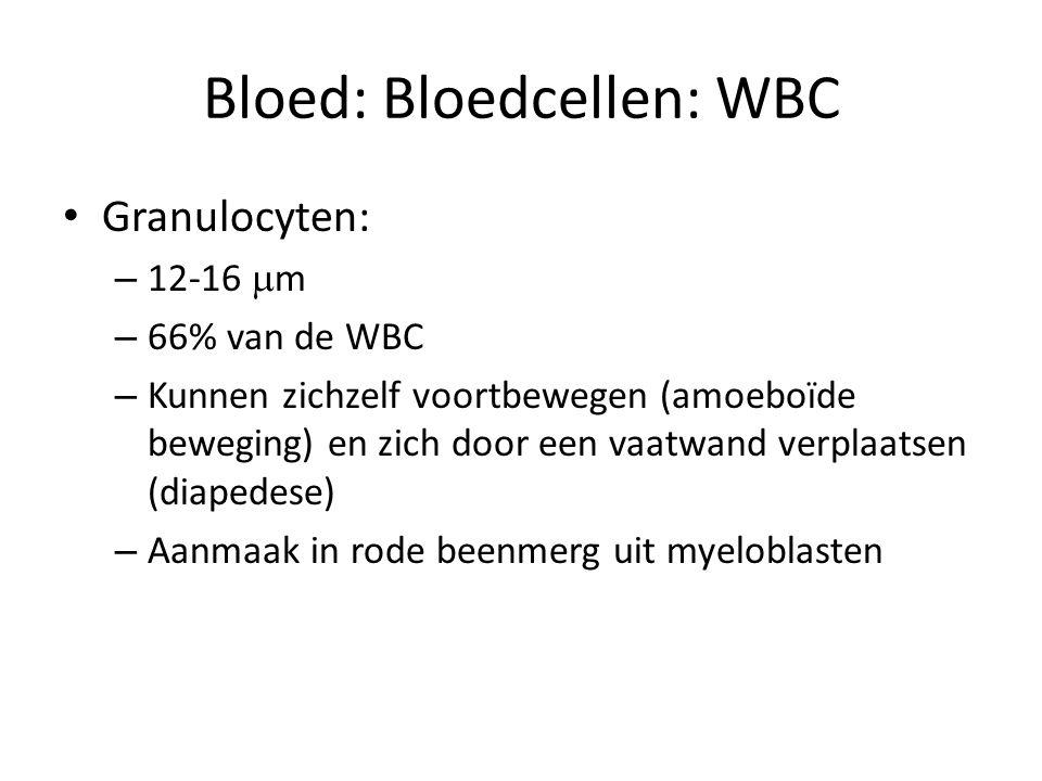 Bloed: Bloedcellen: WBC