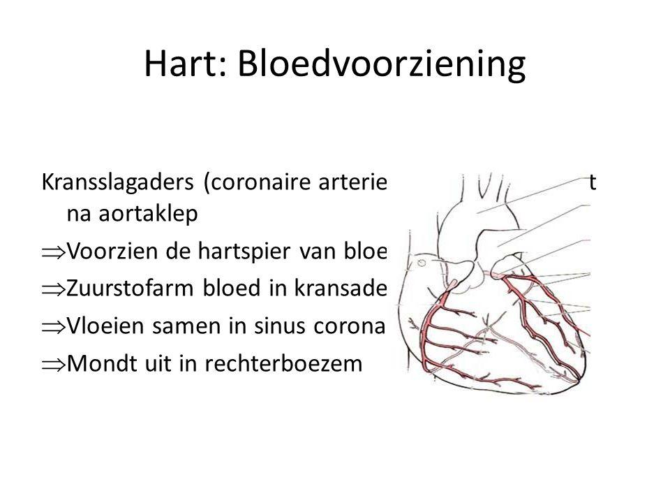 Hart: Bloedvoorziening