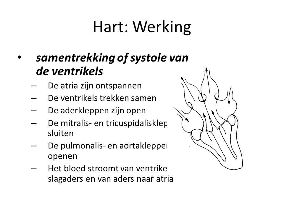 Hart: Werking samentrekking of systole van de ventrikels
